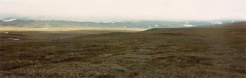 Krajobraz arktycznej tundry na Wyspie Wrangla