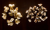 Popcorn (for size comparison) left, and popped sorghum seeds, right