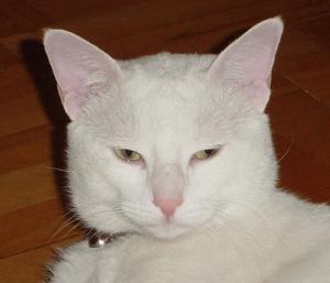 User-Cool Cat