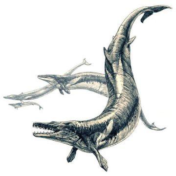 File:Basilosaurus.jpg