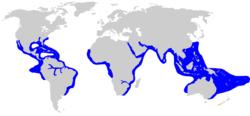 Habitat hiu banteng