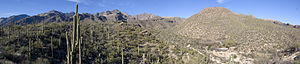 Looking toward Sabino Canyon, Arizona, on Febr...