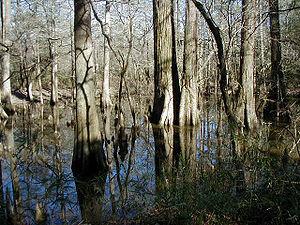 Description: Big Thicket National Park Source:...