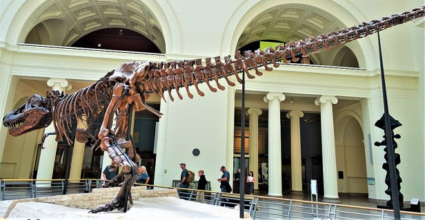 Sue - Tyrannosaurus Rex Dinosaur - Field Museum of Natural History, Chicago by Joy of Museums