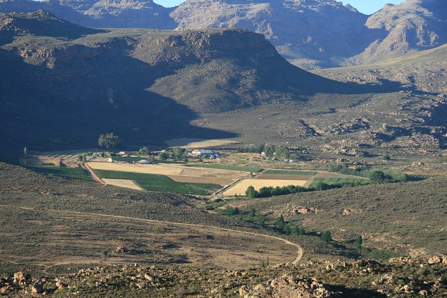 Vineyards in the Cederberg - South Africa