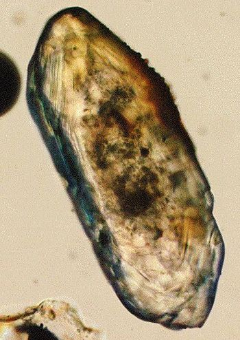 Optical microscope photograph; the length of t...