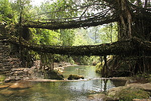 English: Double living root bridge in East Khasi