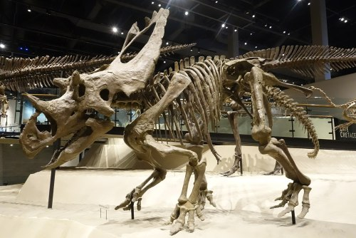 Utahceratops gettyi 3 salt lake city.jpg
