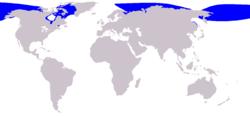 Habitat Beluga