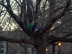 English: A woman who has climbed up a tree in ...
