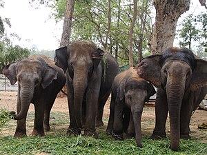 English: bannerghatta national park,Bangalore,...