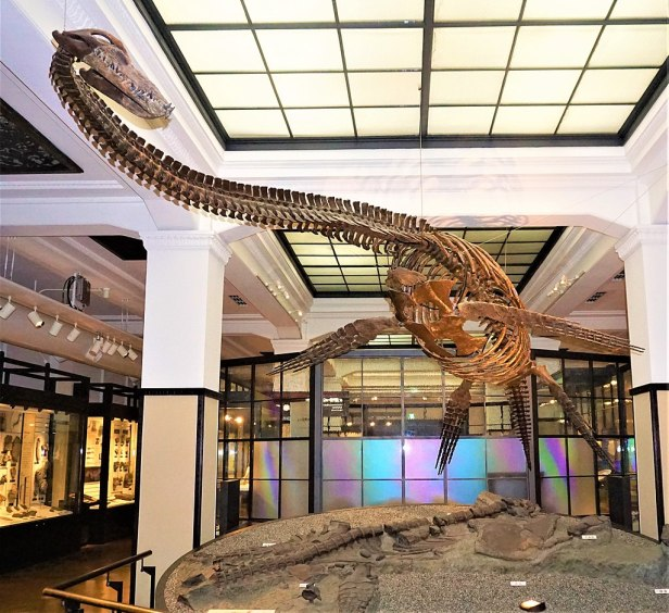 Futabasaurus Suzuki - Joy of Museums - National Museum of Nature and Science, Tokyo
