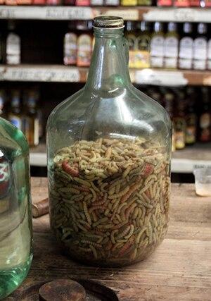English: Gusano de Maguey in a bottle, waiting...