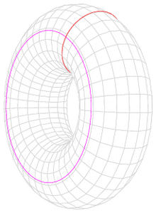 A donut shape with two circles drawn on its surface, one going around the hole and the other going through it.