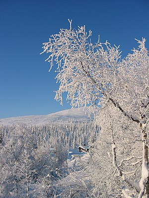 English: Winter in Lapland, Finland 2005.