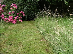 Photo of an English lawn taken on 16 July 2007...