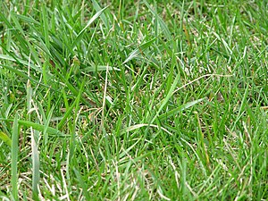 Grass in a field.