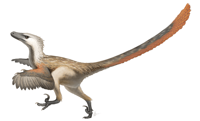 Accurate raptor, How Famous Dinosaurs Really Looked Like