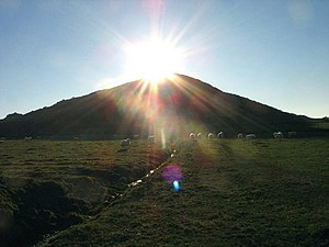 English: Sun worshipping sheep below Moelypenmaen