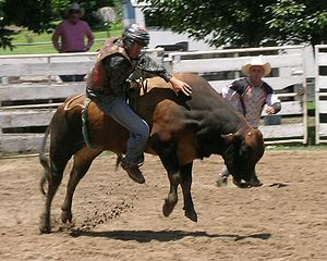 English: Bull riding, Walcha Rodeo.