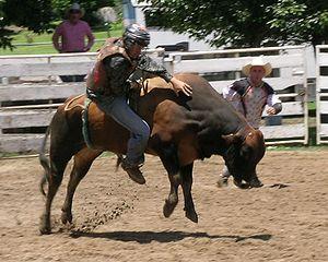 English: Bull riding, Walcha Rodeo.