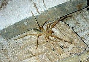 AB010 Camel Spider