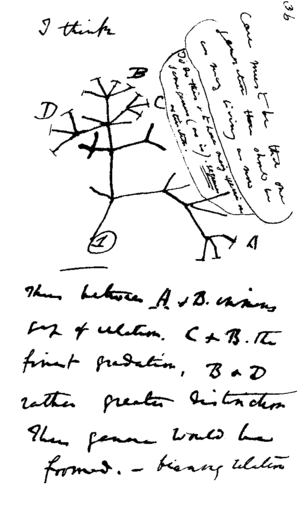 """In mid-July 1837 Darwin started his """"B&qu..."""