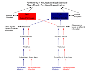 Diagram of the Neuroanatomical basis for emoti...