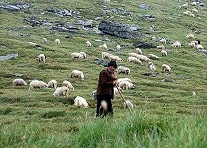 Shepherd in Făgăraş Mountains, Romania