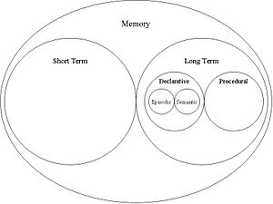 A brief schematic depiction of memory.