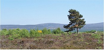 English: The loneliness of Culloden Culloden i...