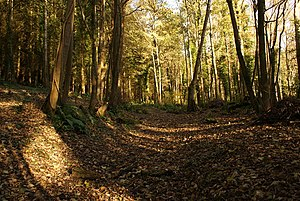 English: Norton Covert The Liberty Trail rises...