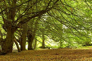English: The approach of autumn, Tardree fores...