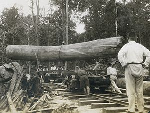 A huge log being placed on a railroad car at B...