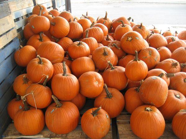 Pumpkin - Wikipedia