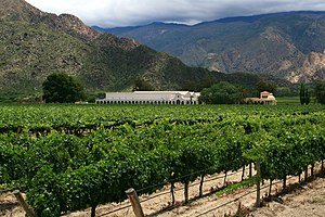 A winery near Cafayate, Salta Province, Argentina