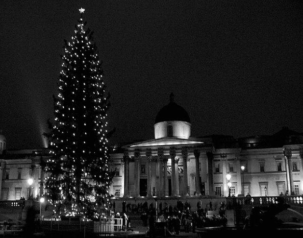 Trafalgar Square - Tree and Natl Gallery