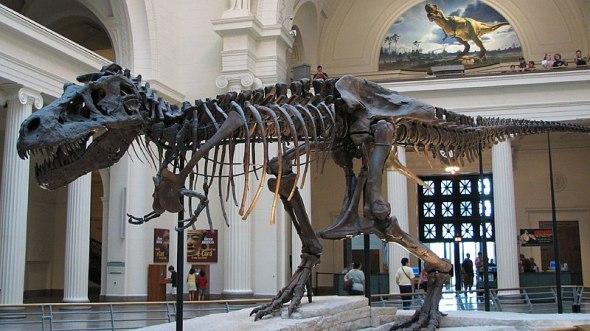 800px Tyrannosaurus Sue ছবি ব্লগঃ 160 কোটি বছর আগের রাজাদের[ডাইনোসর] ছবি | Techtunes