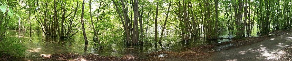 """Résultat de recherche d'images pour """"le lac d'orient le lac d'Amance """""""