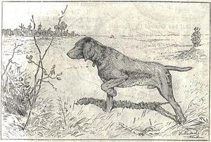 Heubach hunting dog