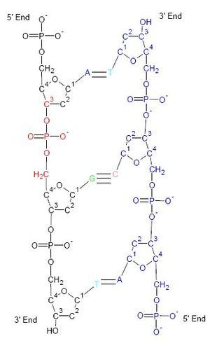 DNA Biochemical structure