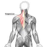 treino de ombro e trapezio