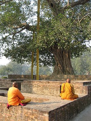 English: Buddhist monks meditating under the A...
