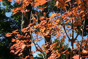Fall Foliage in Buffalo, NY