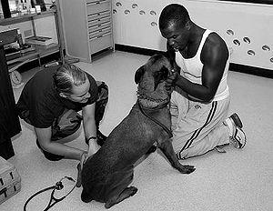 Army Sgt. William A. Peyton, Jr. a JDOG dog ha...