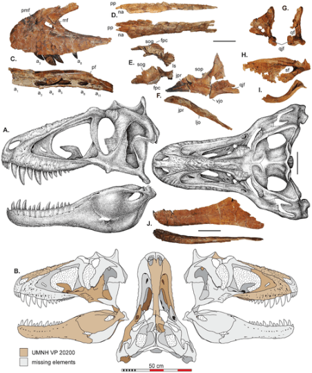 File:Lythronax.png