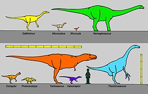 Size comparison between some of the [dinosaurs...