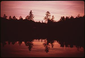 RED SPRUCE SILHOUETTED AGAINST SUNSET SKY AT T...