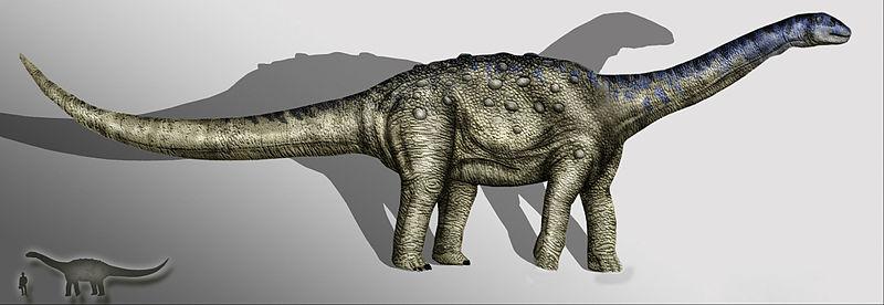 File:Aeolosaurus copia.jpg