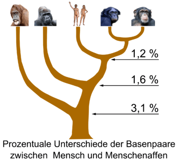 Difference in DNA base pairs between Homo sapi...